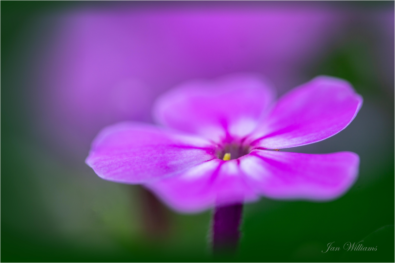 Flower-wp