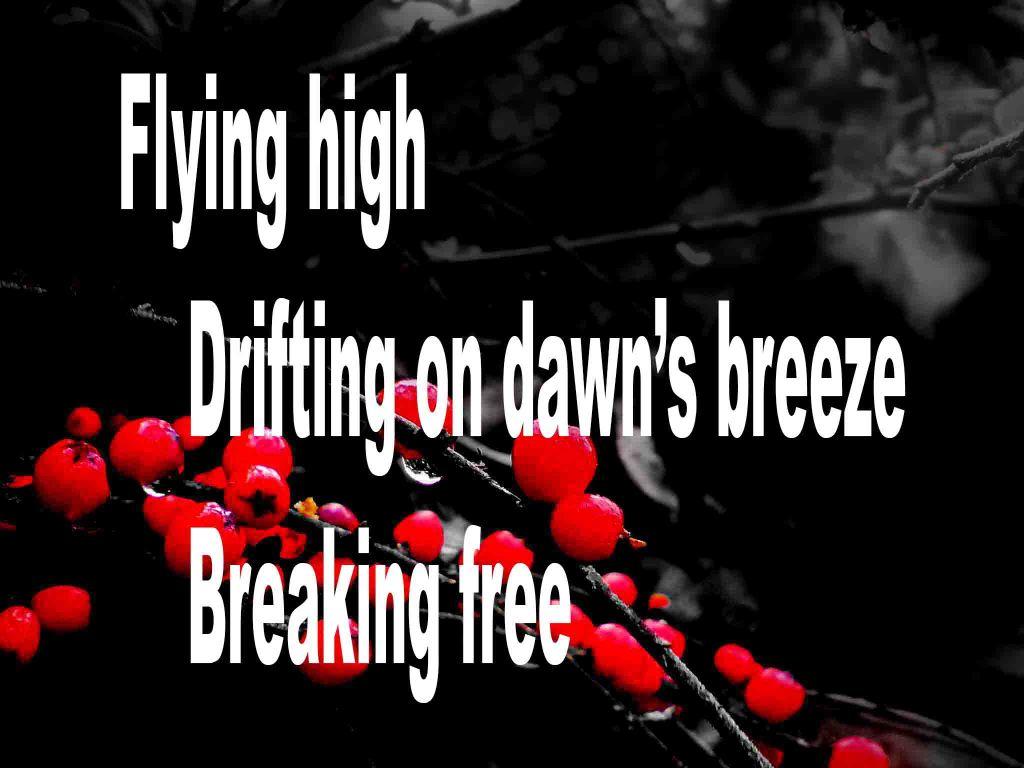 An image made up of a black background with red berries and on which a three line haiku poem is written.