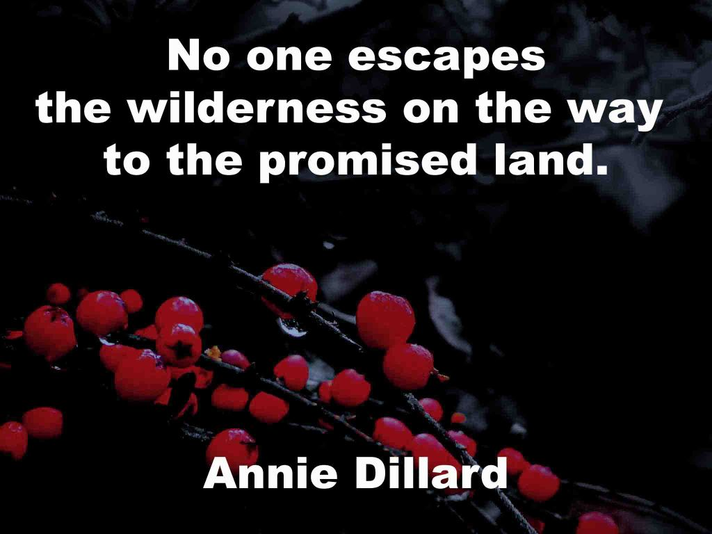 The image shows a spray of red berries on a black background on which a quotation by Annie Dillard is written. It speaks of no one escaping the wilderness on the way to the promised land.