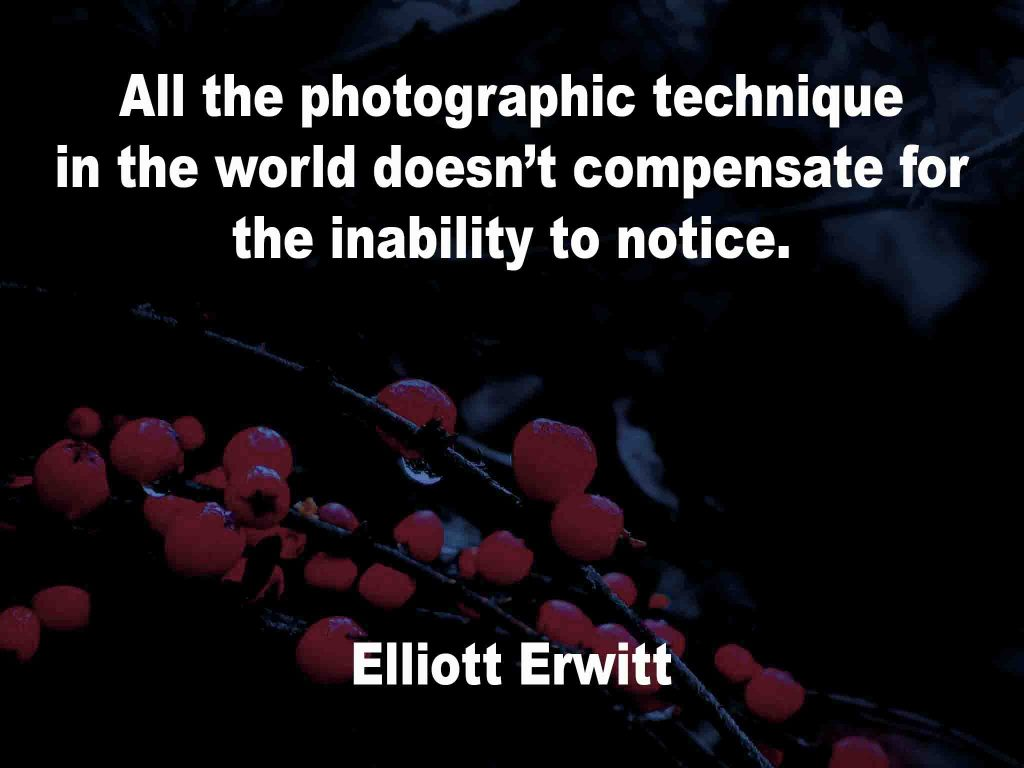 The image shows a spray of red berries on a black background on which a photography quotation by Elliott Erwitt is written. It speaks of that the possession of all the photographic technique in the world doesn't compensate for the inability to notice.
