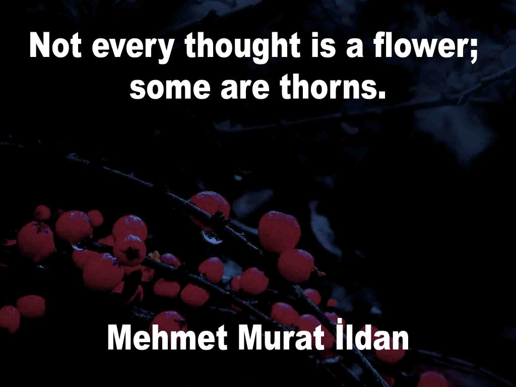 The image shows a spray of red berries on a black background on which a quotation by Mehmet Murat İldan is written. It speaks of not every thought being a flower some are thorns.