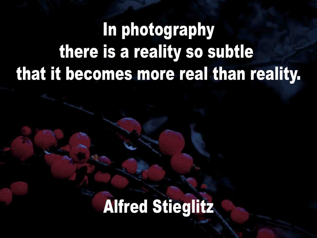 The image shows a spray of red berries on a black background on which a quotation by Alfred Stieglitz is written. It speaks of how in photography there is a reality so subtle that it becomes more real than reality.