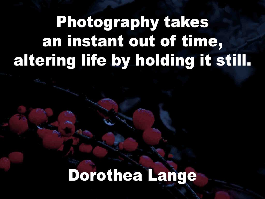 The image shows a spray of red berries on a black background on which a photography quotation by Dorothea Lange is written. It speaks of photography taking an instant out of time and how it alters life by holding it still.