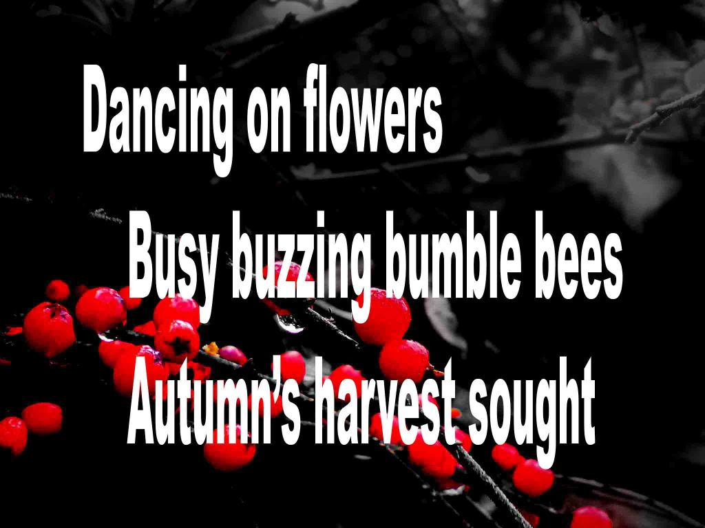 The image shows a spray of red berries on a black background on which a haiku titled Dancing with Flowers poem is written, The poem speaks of flowers, bumble bees and autumn's harvest.