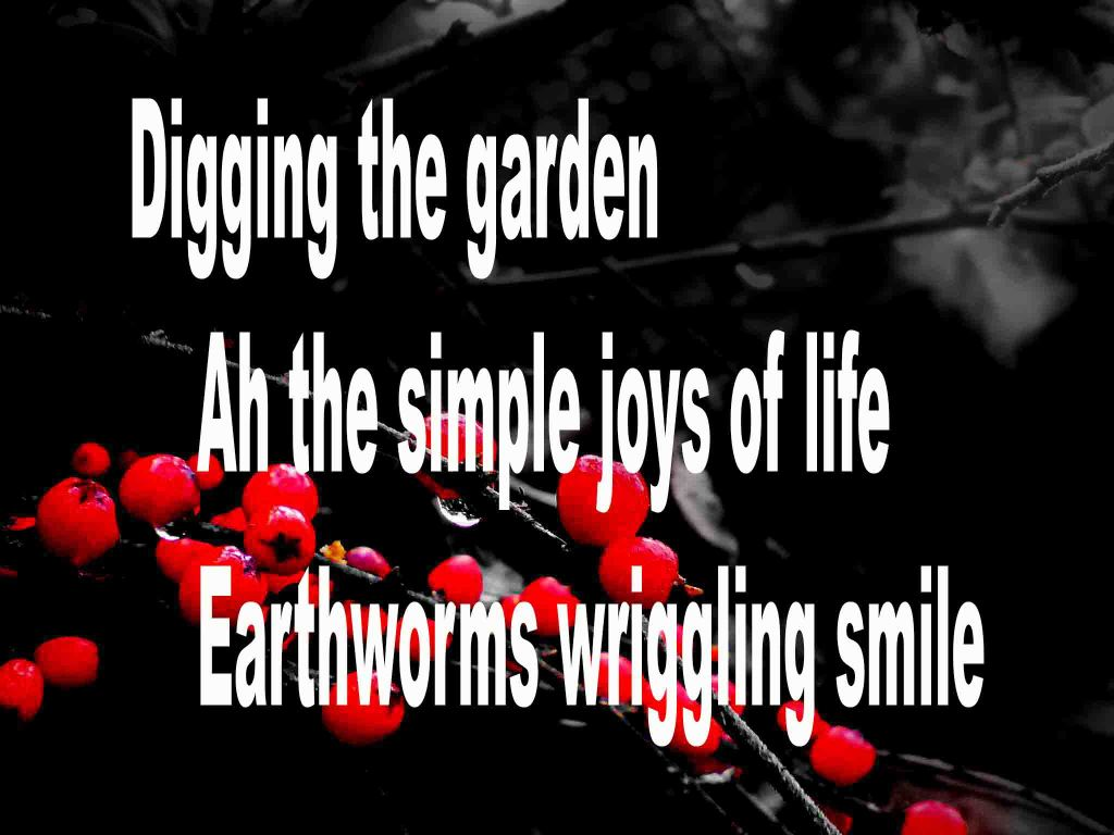 The image shows a spray of red berries on a black background on which a haiku titled Digging the Garden is written. The poem speaks of the simple joys of life and worms smiling.
