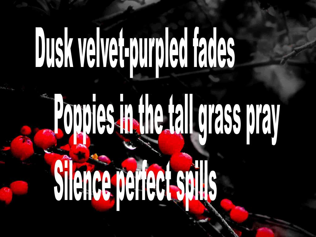 The image shows a spray of red berries on a black background on which a haiku titled Dusk Velvet-purpled Fades is written. The poem speaks of twilight, poppies in a field and perfect silence .