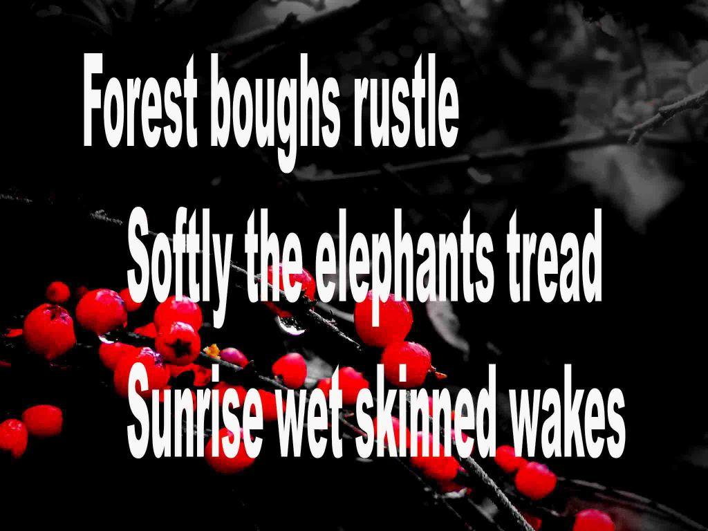 The image shows a spray of red berries on a black background on which a haiku titled Forest Boughs Rustle is written. The poem speaks of a herd of elephants, at sunrise, walking through a rain soaked forest.