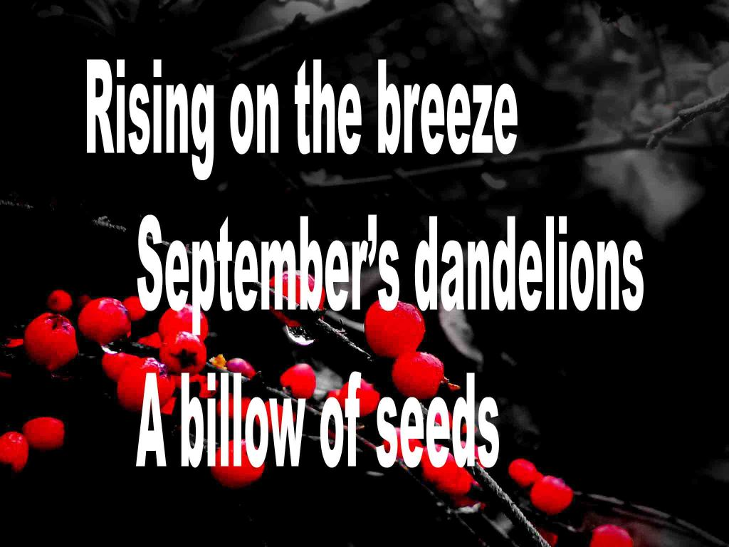 The image shows a spray of red berries on a black background on which a haiku titled Rising on the Breeze is written. The poem speaks of September's breeze, dandelions and their seeds.