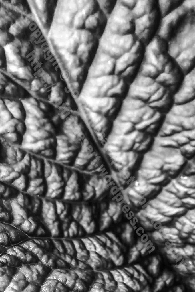 The image depicts a photograph titled Without Words 440 by the photographer Goff James. The work is a macro black and white photo of of the central part of a leaf.