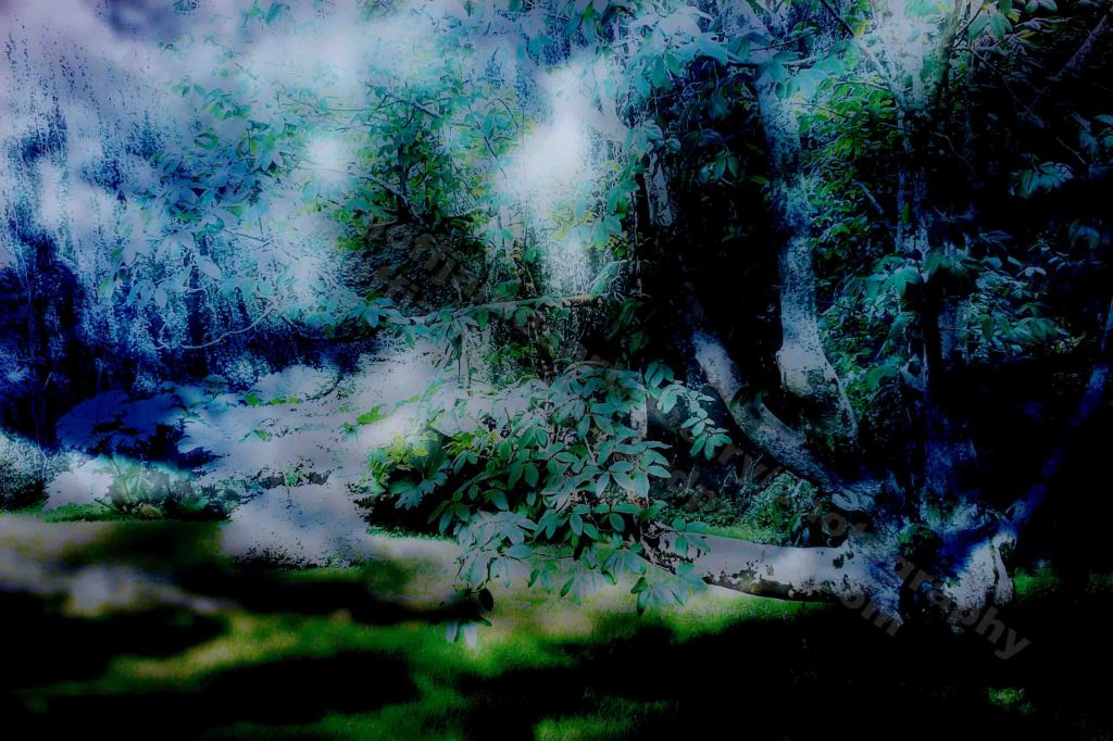 The image depicts a photograph titled Without Words 441 by the photographer Goff James. The work is a surreal experimental colour photo of morning clouds drifting in a woodland landscape. .