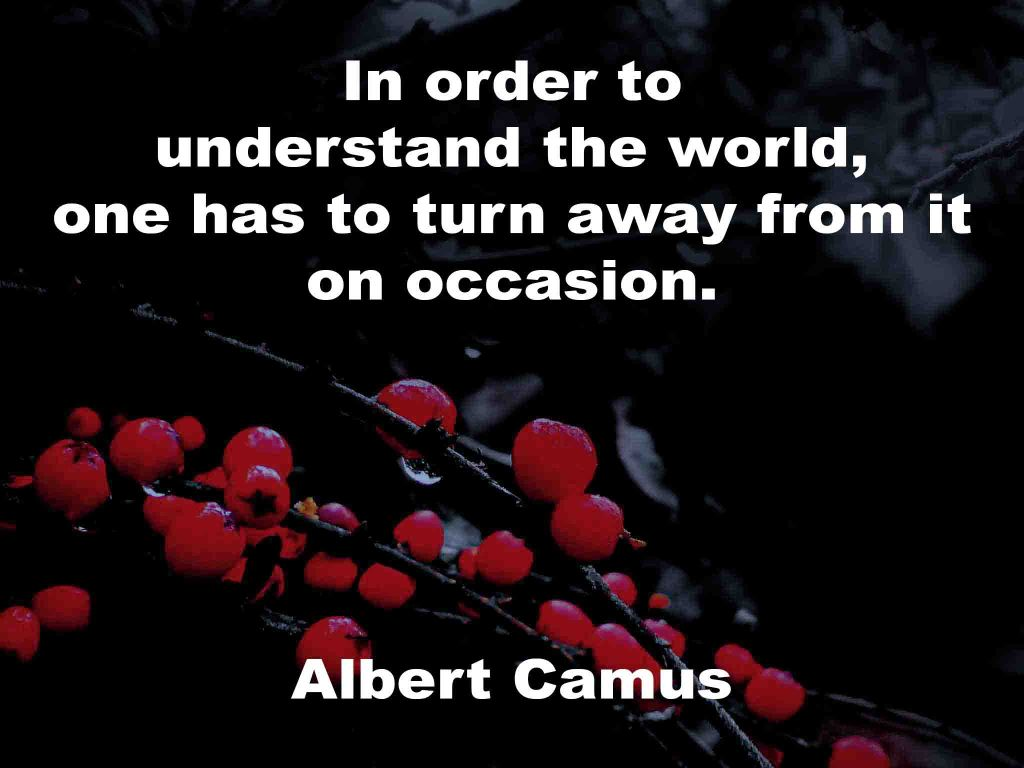 The image shows a spray of red berries on a black background on which a Life Box quotation by Albert Camus is written. It speaks of in order to understand the world, one has to turn away from it on occasion.
