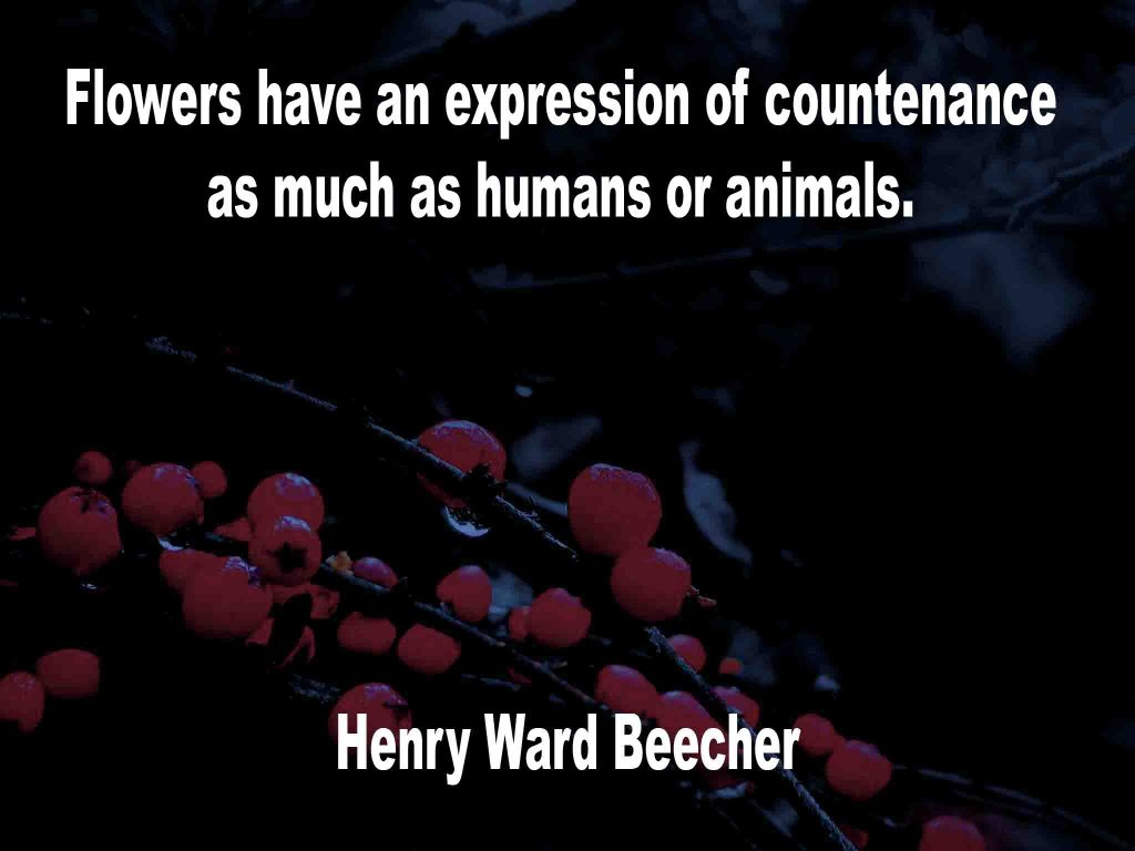 The image shows a spray of red berries on a black background on which a flower quotation by Henry Ward Beecher is written. It speaks of flowers having an expression of countenance as much as humans or animals.