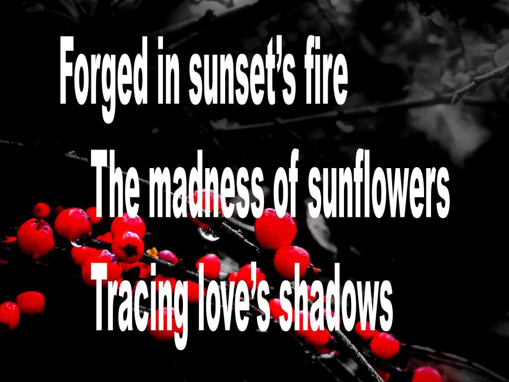 The image shows a spray of red berries on a black background on which is written a haiku poem titled Forged in Sunset's Fire by the poet Goff James. The poem speaks of the madness of sunflowers being forged in sunset's fire and tracing love's shadows.