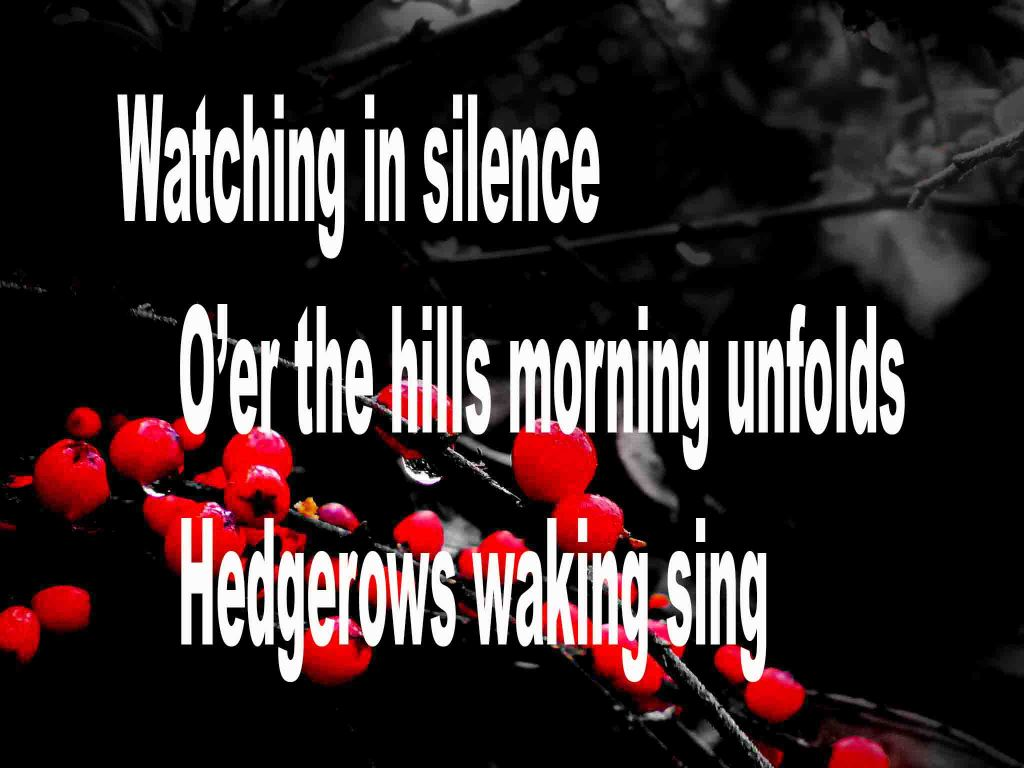 The image shows a spray of red berries on a black background on which is written a haiku poem titled Watching in Silence by the poet Goff James. The poem speaks of watching in silence as the morning unfolds over the hills and the hedgerow comes alive with birdsong.